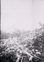 Pinhole Ground Invert LP
