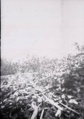 Pinhole Ground Invert LP