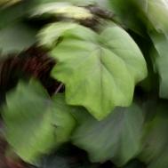 green-leaf1-icm